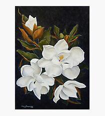 Magnolia Moments Photographic Print
