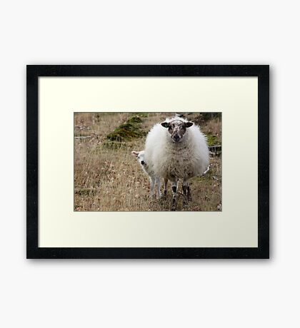 Don't be so Shy - It is Spring Framed Print