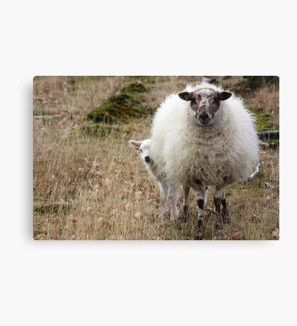Don't be so Shy - It is Spring Canvas Print