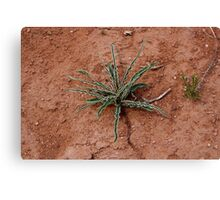 Cactus at Kodachrome State Park Utah USA Canvas Print