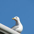 Lord of All He Surveys - Seagull on Roof von BlueMoonRose
