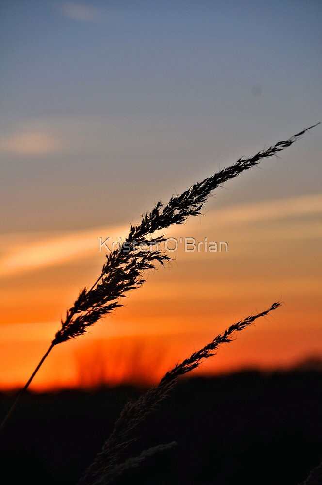 Blowing in the Sunset by Kristen O'Brian
