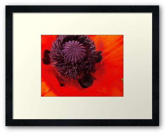 Poppy dust by MarianBendeth