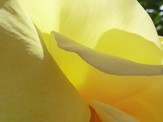 The Yellow Petal Mountains  by PictureNZ