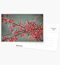 Spring blossom. Postcards