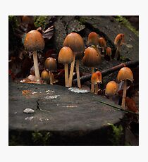 The Knights of the Round Table Photographic Print
