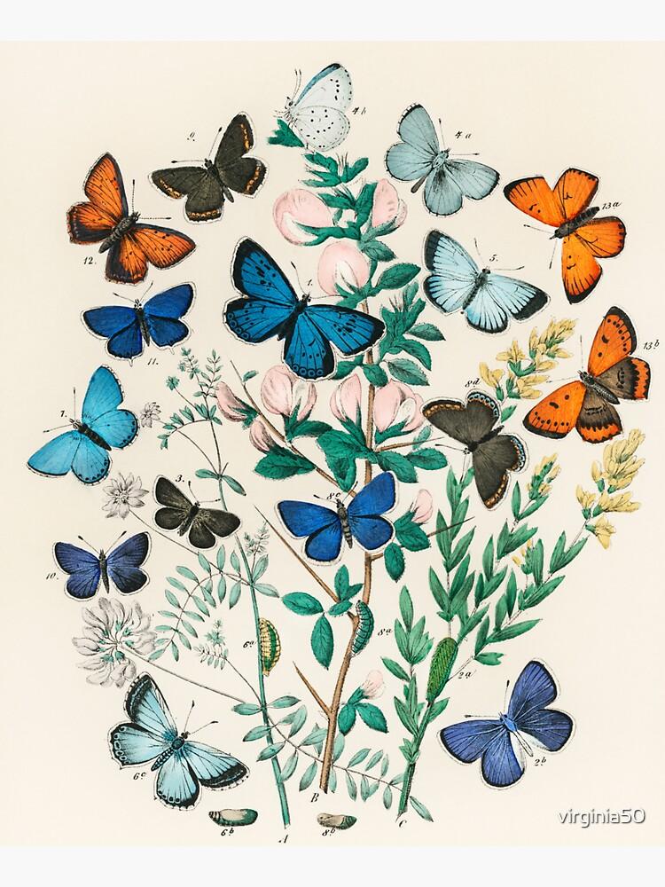 Butterflies, vintage illustrations by virginia50