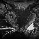 Sleeping Beauty by Lilian Marshall