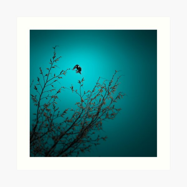 sparrow (002)  Art Print