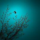 sparrow (002)  by dirk hinz