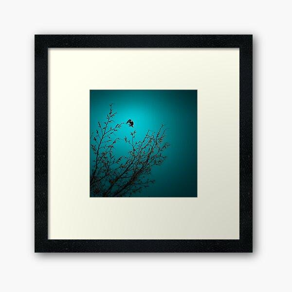 sparrow (002)  Framed Art Print