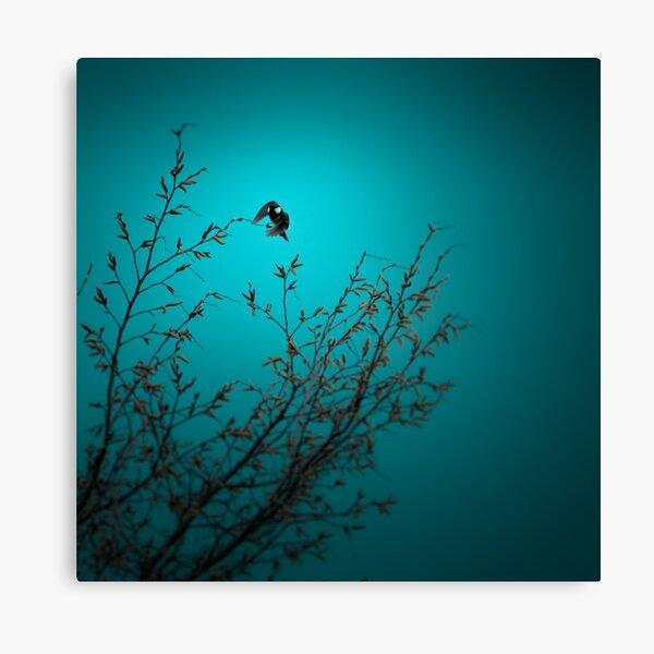 sparrow (002)  Canvas Print