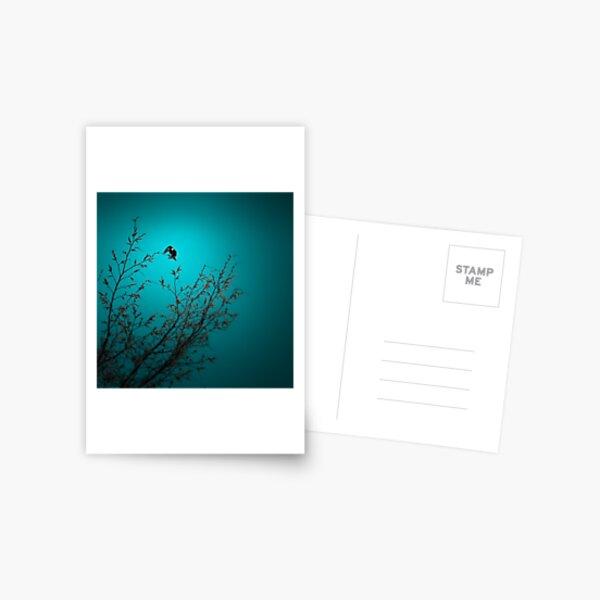 sparrow (002)  Postcard
