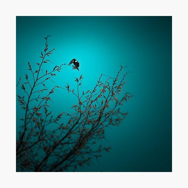 sparrow (002)  Photographic Print