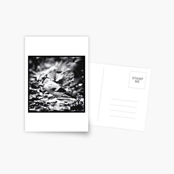 sparrow (003)  Postcard