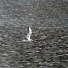Seagull flying over a river by JenniferLouise
