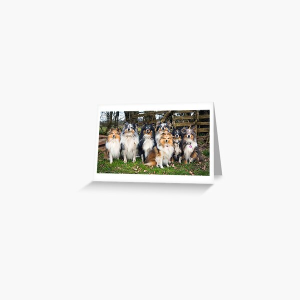 Alison/'s Animals Funny Basset Hound Dog Lovers Blank Birthday Greeting Card
