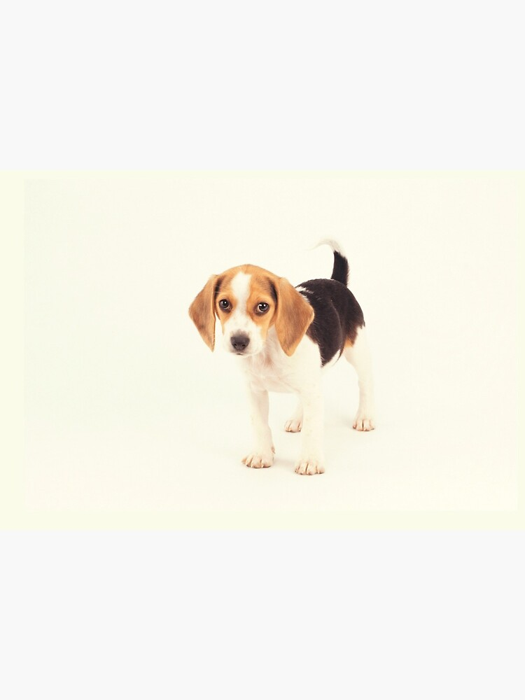 Beagle Dog Gift by patriciax19