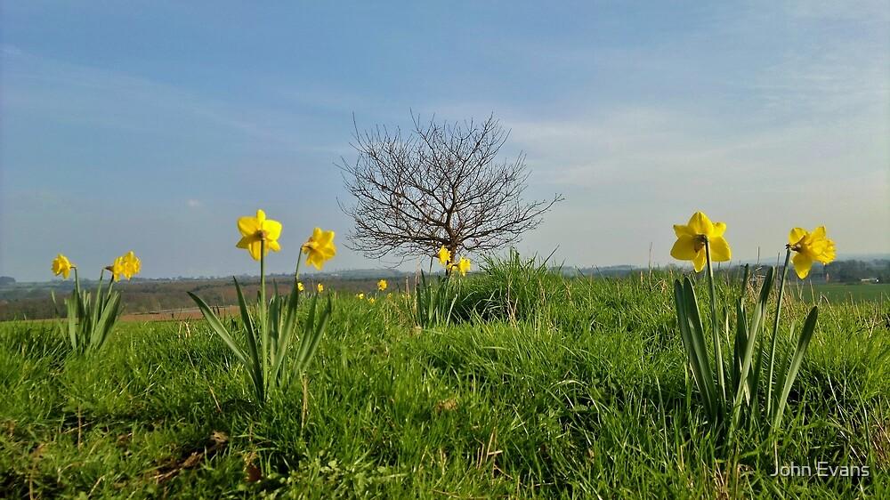 Shropshire in Spring by John Evans