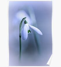 Silky Snowdrops II Poster