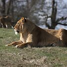 Enjoying a rest in the spring sunshine by JohnBuchanan