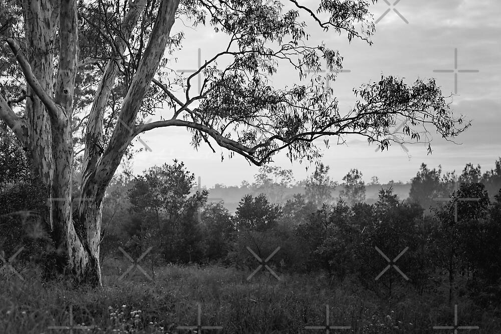 The old gum tree by Mel Brackstone