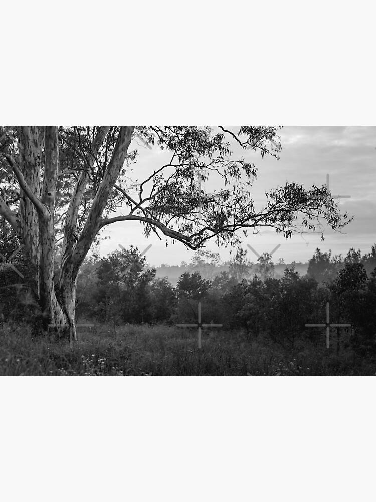 The old gum tree by MelBrackstone
