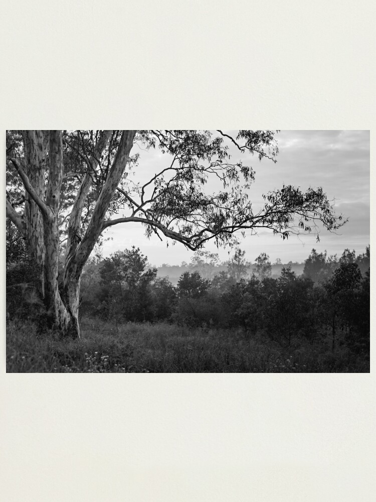 Alternate view of The old gum tree Photographic Print