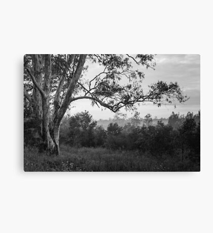 The old gum tree Canvas Print