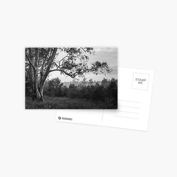 The old gum tree Postcard