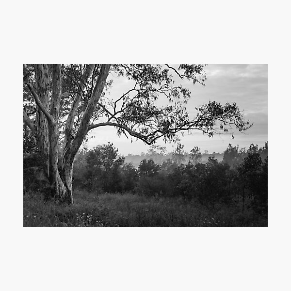 The old gum tree Photographic Print