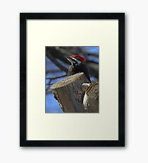 Sitting Handsomely  Framed Print