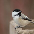 Chickadee just finished his snack by awcreations765