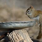 Squirrel just grabbing a snack by awcreations765