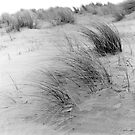 Dune Grass by Paul Berry