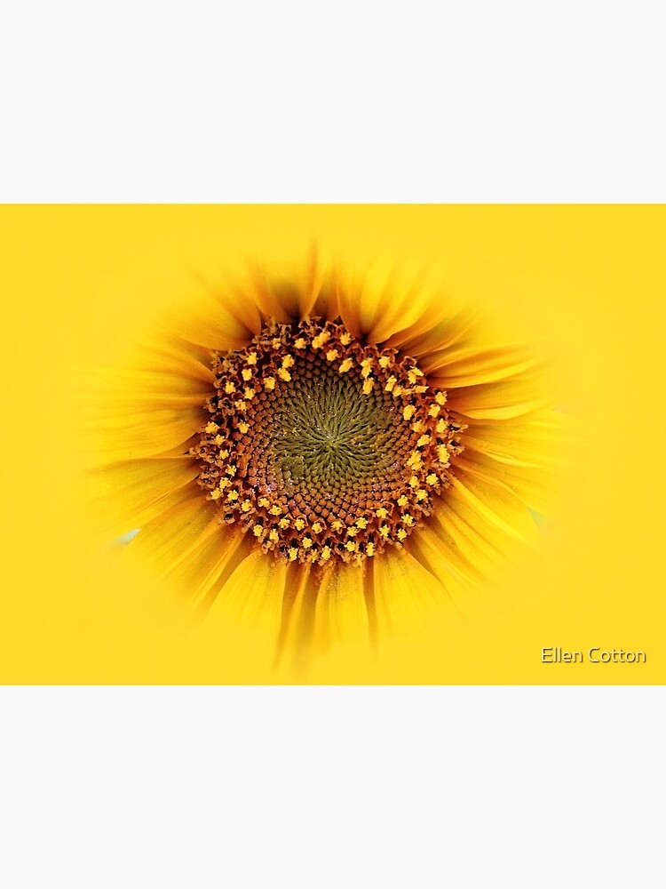 sunflower by ellcot