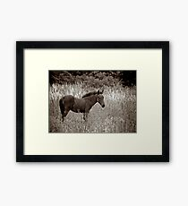 Filly Framed Print
