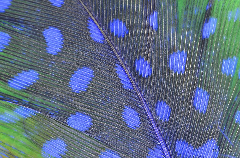 Feather Close-up by relayer51
