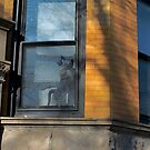 Window Cat by Imagery