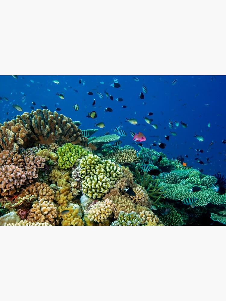 Reef life by DavidWachenfeld