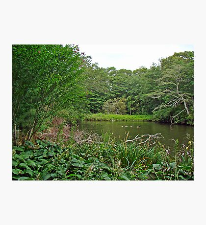 Oyster Pond From Spohr Gardens - Falmouth MA Photographic Print