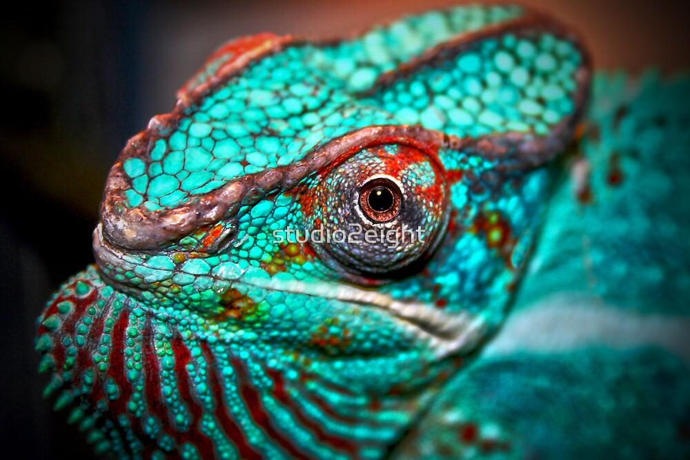 Tragan - Panther Chameleon by studio2eight