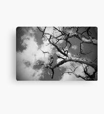 Tree   Sky Canvas Print