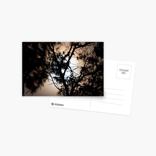 Moonlight, Clouds & Wind Postcard