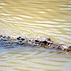Crocodile cruising by Akrotiri