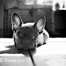 Oscar in deep thought by Mark Cooper