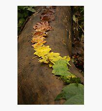 Autumn Leaf Trail Photographic Print