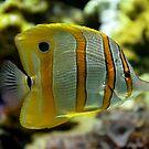 Underwater tiger by redscorpion