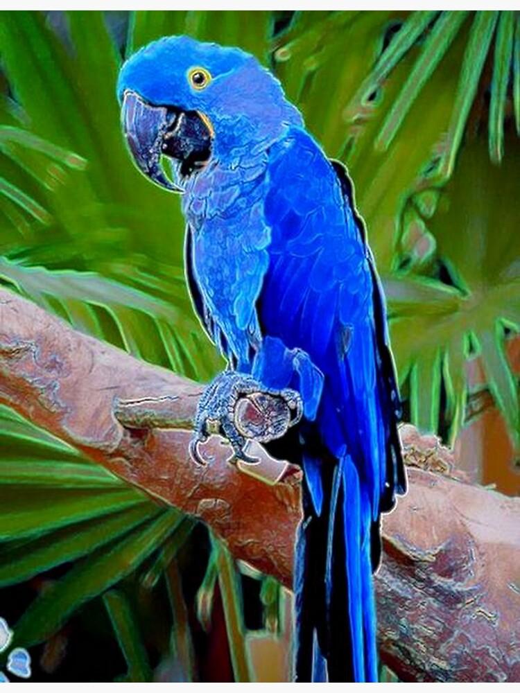 BLUE TROPICS by michaeltodd