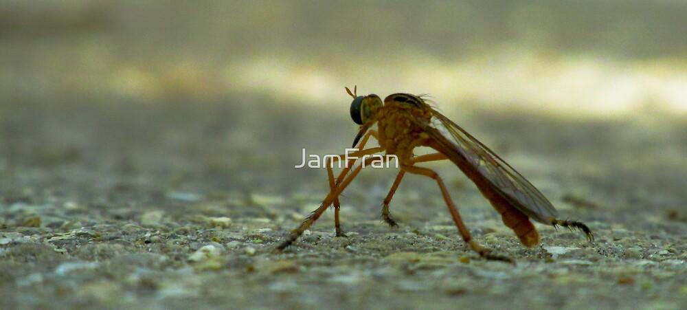 Bug on Asphalt by JamFran